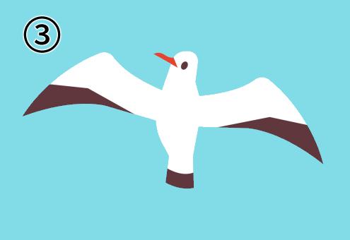 羽を大きく広げて上に飛ぶカモメ