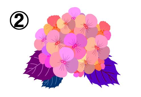 ピンク、ベージュ、オレンジ等の花に、紫、ネイビー、赤紫の葉の紫陽花