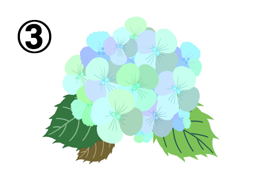 水色、黄緑、薄紫等の花に、緑、抹茶色、黄緑の葉の紫陽花