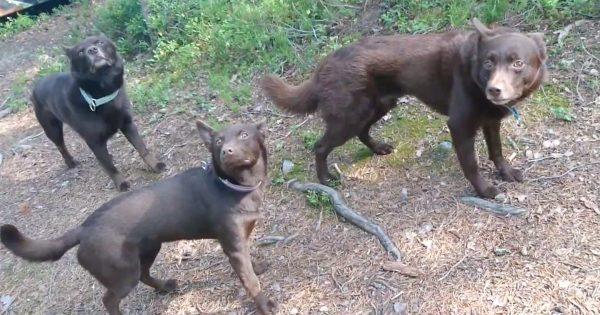 ほんとに生きてる…?牧羊犬のスゴさを伝える30秒動画に「すばらしいトレーナー」