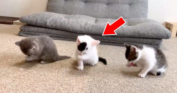 無心でペロペロ…。可愛すぎる「子猫の20秒動画」が89万再生を突破