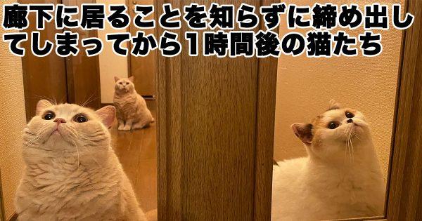 はよ開けて…。うっかり閉め出されたネコたちの「味のある表情」に19万いいね