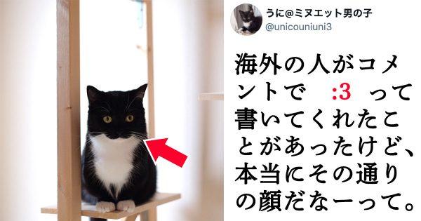 海外民から「:3」と呼ばれたネコ、実物はマジでそのまんまでしたw
