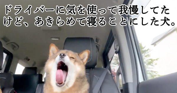 「飼い主に気を使ったけど、あきらめて寝る犬」でも見てほっこりしようぜ!!!