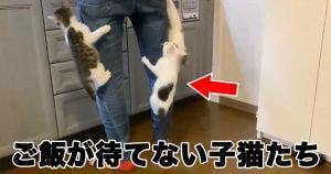 子猫がわらわら…。ご飯どきに爆誕した「人間キャットタワー」に反響