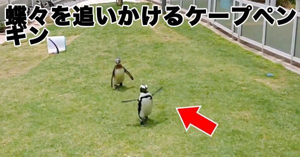 まるで絵本の世界…「ペンギンと蝶の追いかけっこ」に14万いいね