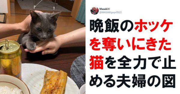 「食いしん坊アニマル」の生態かわいすぎんか…? 7選
