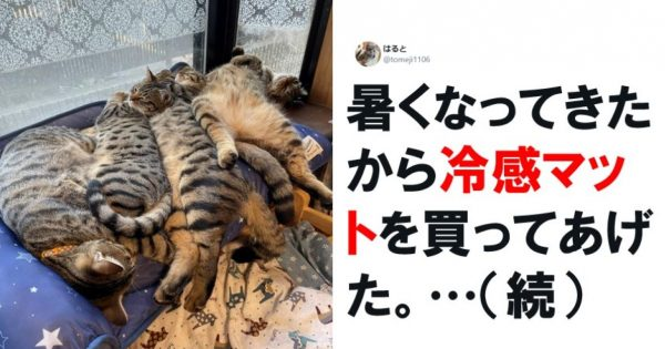 「猫の写真」は働くオトナの必須栄養素です 7選
