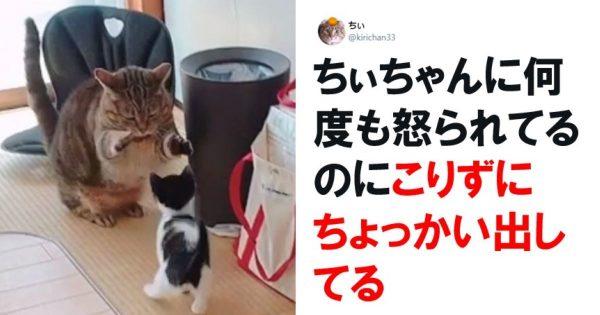 え、「猫の多頭飼い」ってこんな幸福度高いの…? 8選