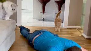 飼い主が倒れたらどうする?2匹の猫の「正反対な実験結果」に反響