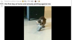 殺意100%な子猫動画に海外ネット民「目を開けて寝た方が身のため」