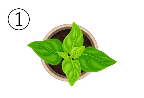 大きめの葉の植物が植わった、丸いベージュの鉢