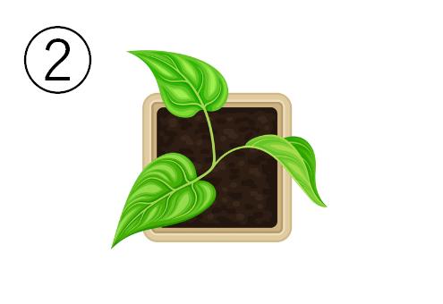 スペードのような形の葉の植物が植わった、正方形のベージュの鉢