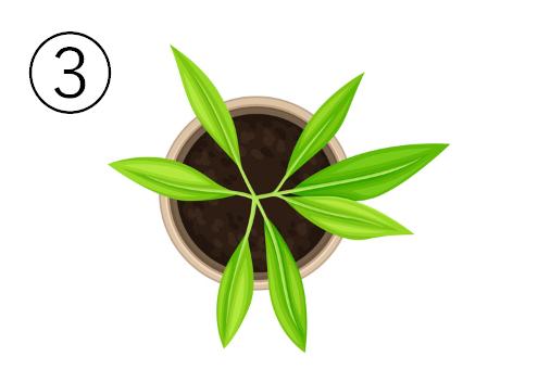 細長い葉の植物が植わった、丸いベージュの鉢
