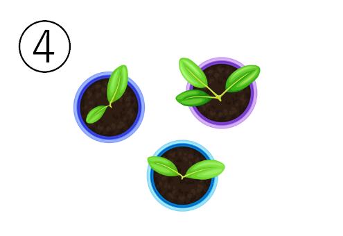 芽が出ている、青、紫、水色の小さい丸い鉢3つ