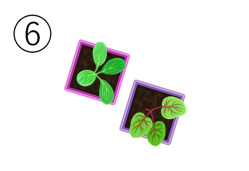 別々の植物が植わっている、紫とピンクの小さい正方形の鉢2つ