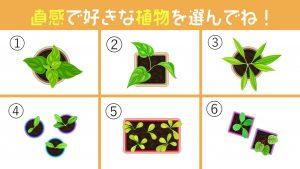 【心理テスト】惹かれる植物でわかる、あなたの「もったいない精神」の強さ!