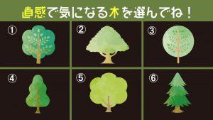 【心理テスト】選んだ巨木が象徴する、あなたの「信念の強さ」