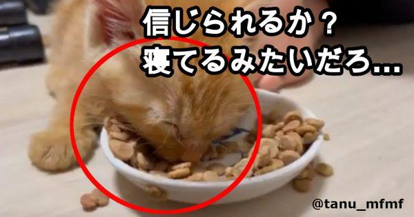 【子猫のモグモグ風景…って寝とる!】210万再生突破の「最強ほっこり動画」、見とく?