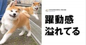 【犬・ハム・兎】「超ハイテンション動物」はエナドリに勝る 7選