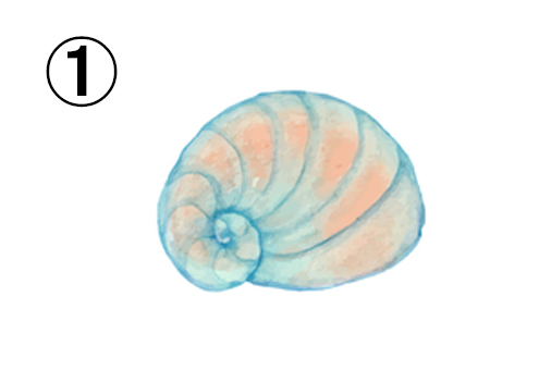 ターコイズとオレンジのグラデーションの巻き貝