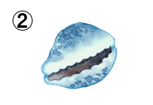 隙間のあいた、深い青の貝殻