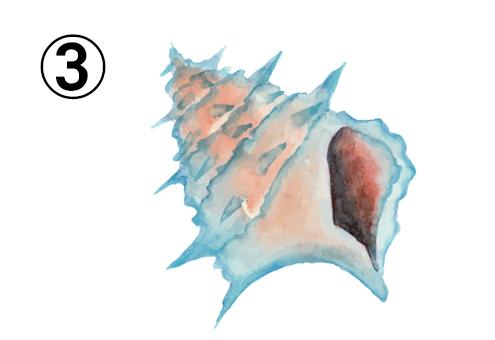 棘のある、ターコイズとオレンジのグラデーションの貝殻