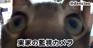 監視カメラが捉えた《近すぎるネコ》に反響多数「急に見たら声出そう」