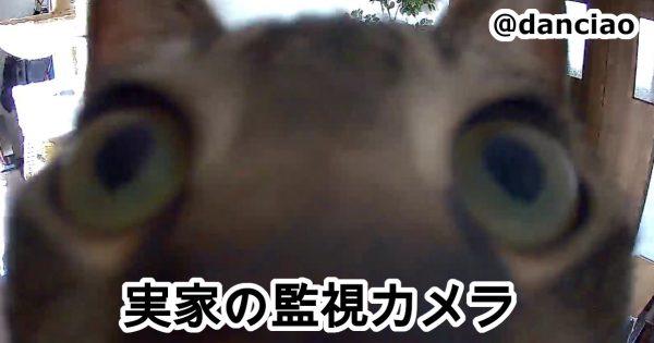 監視カメラを覗き込む猫