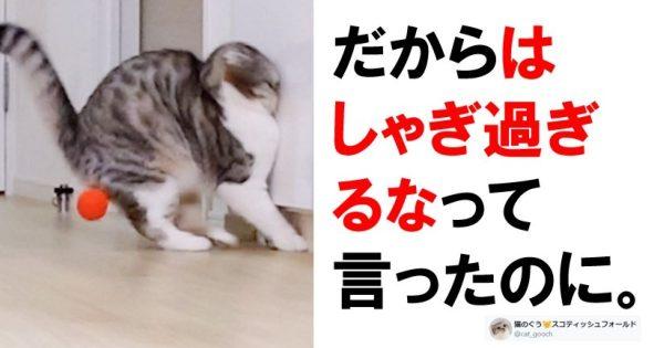 【うんちを連れて爆走】猫ってボケの引き出しが多すぎるな 7選
