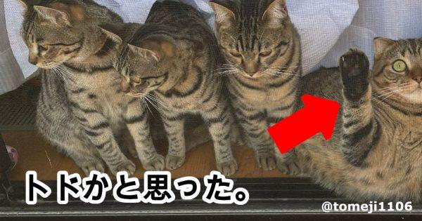 【オチ担当かな?】はるとさん家の「トドみたいなポーズの猫」に20万人が爆笑!