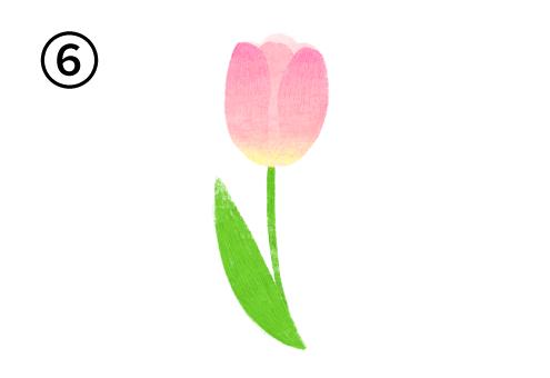ピンク、黄色のグラデーションのチューリップ