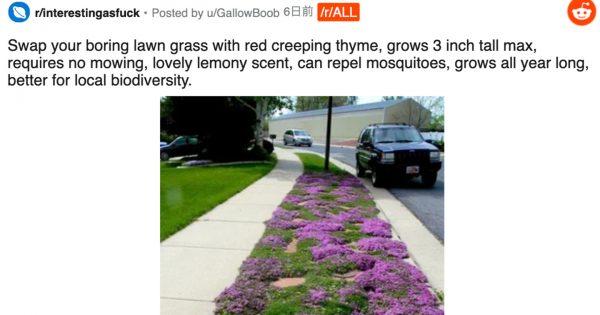 蚊を撃退、草刈りの必要もなしの「クリーピングタイム」が海外で大注目 「芝の代わり」になりえるか?