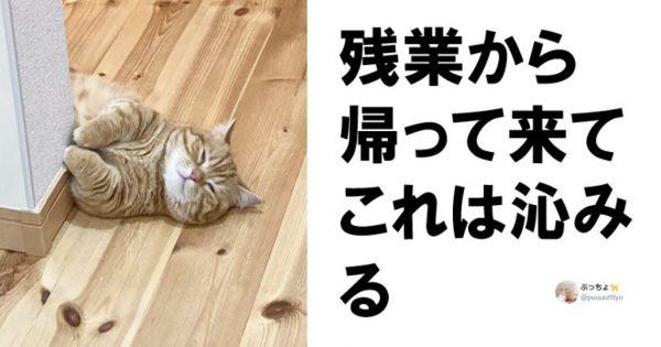 【合法】悩み・疲れにも効く「猫」7選