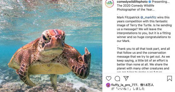 優勝は「中指を立てたカメ」。動物オモシロ写真コンテスト、2020年のノミネートをおさらい
