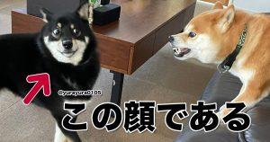 犬は「表情の引き出し」が多すぎると思う 10選
