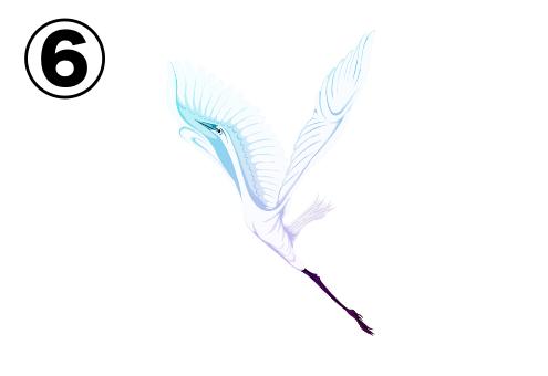 飛び立った白鳥