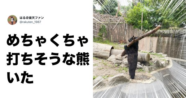 パンダの寝相ってこんな可愛いの…? 動物園で撮れた「レアな一枚」10選
