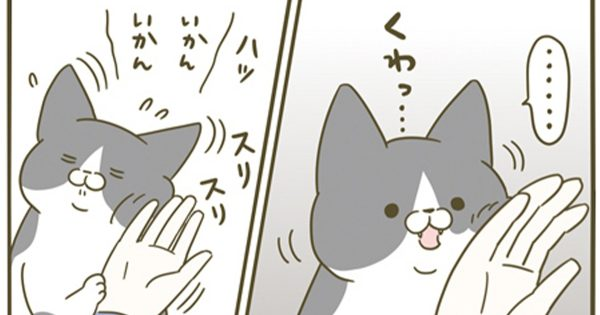 共感マンガ「噛みたいけど…」猫が成長して我慢を覚えたのが愛らしすぎる