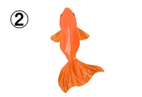 ゆらゆら泳ぐ、尾の大きいオレンジの金魚