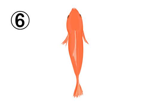 真っ直ぐに泳ぐオレンジの金魚