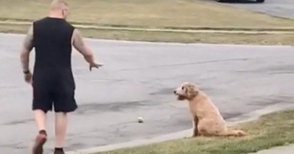 交通安全マナー完璧すぎ!「ゼッタイに車道に出ない犬」のお利口さに称賛集まる