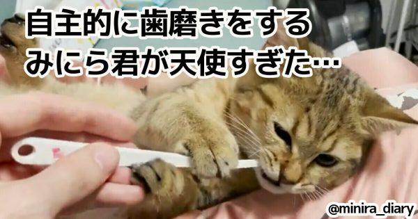 【3万人が悶絶】自分で「歯磨きできる」猫ちゃんが尊すぎるんじゃが…