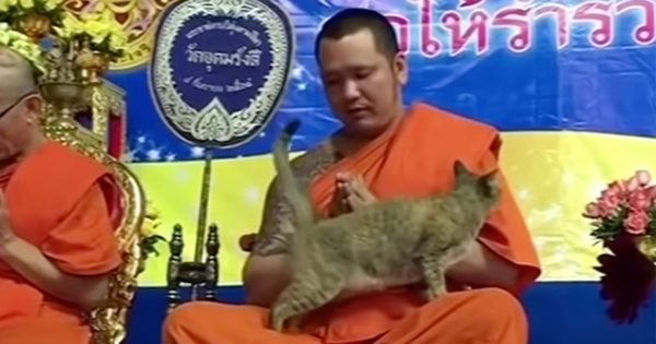 【可愛さに勝てず】甘えたい猫 VS お祈り中の僧侶。取材で「猫に集中してしまった」と回答