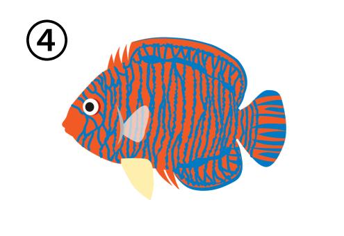 オレンジと青の斑のエンゼルフィッシュ