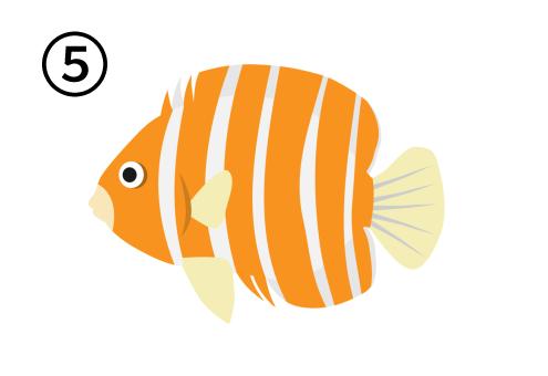 オレンジと白のストライプのエンゼルフィッシュ
