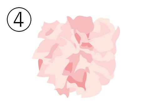 桜色のカーネーション