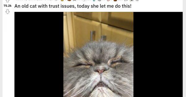 【至福の48秒】「警戒心の強すぎる猫」の究極のデレ顔です、ご査収ください。