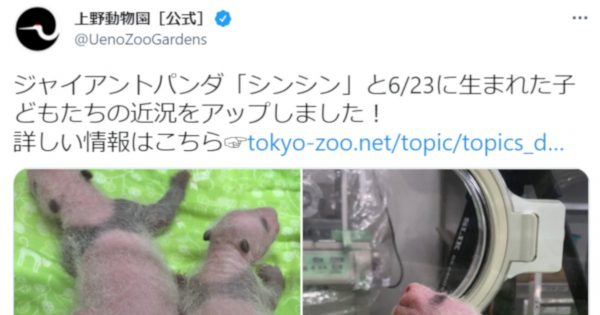上野動物園がパンダのシンシンと「双子の赤ちゃん」の近況動画を公開
