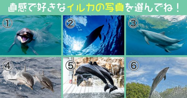 【心理テスト】選んだイルカが、あなたの「もうすぐ解決する悩み」を教えてくれます!